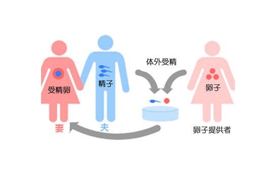 科学性的突破。即使女性自己的卵子数量不足或者她们自身卵子质量差,也能使女性们得到帮助,促成她们怀孕,是成为母亲的更成功的方法之一。这个技术更普遍地使用于经过自然尝试未能成功地怀有健康孕期或者诞下活胎、或者进行多次试管婴儿周期治疗的女性中。这个技术也常被用于具有卵巢早衰、卵巢储备减弱、卵泡刺激素升高和年龄超过43岁的女性中。由于女性不孕不育而不能有孩子;和对有较高风险将遗传性疾病遗传给孩子的女性而言,改变了观念。结合年轻的卵子和优化准备人和准母亲,使得成为一项非常成功的生殖方法。 如何进行?进行试管婴儿的第