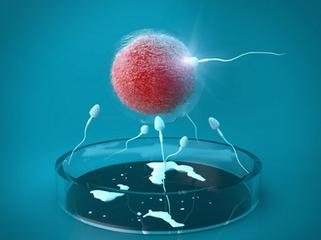 【广州地下试管婴儿市场】_人工受精与人工授精傻傻分不清?