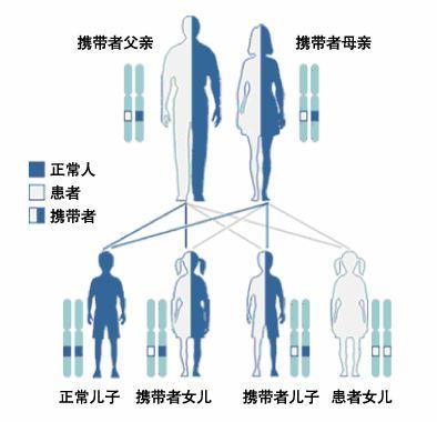 【国内做第三代试管婴儿多少钱】_单基因遗传病的常染色体显性遗传