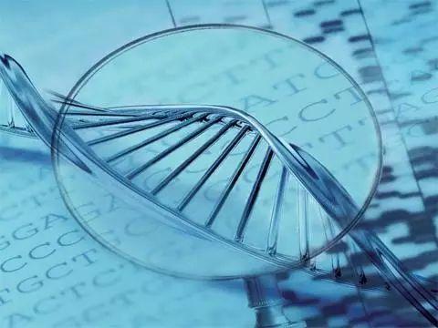 【广州南方医院做试管婴儿】_为什么要做胚胎植入前基因筛选(PGS)?