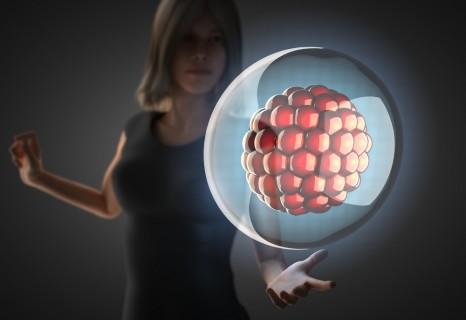 【深圳北大试管婴儿】_桑椹胚的基础知识,以及对试管婴儿着床和妊娠的意义