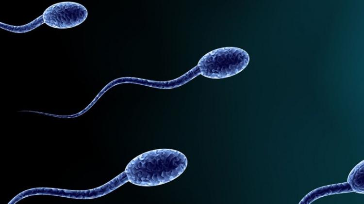 【广东省第二人民医院 试管婴儿】_在试管婴儿治疗过程中4种提高男性生育能力的方法!