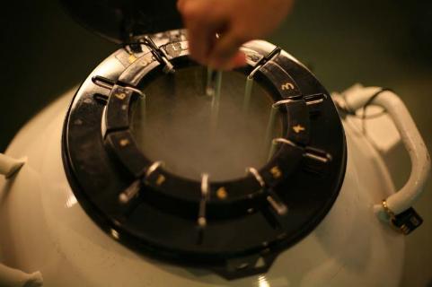 【深圳泰国试管婴儿】_如何大限度地提高冷冻胚胎移植(FET)的成功率?