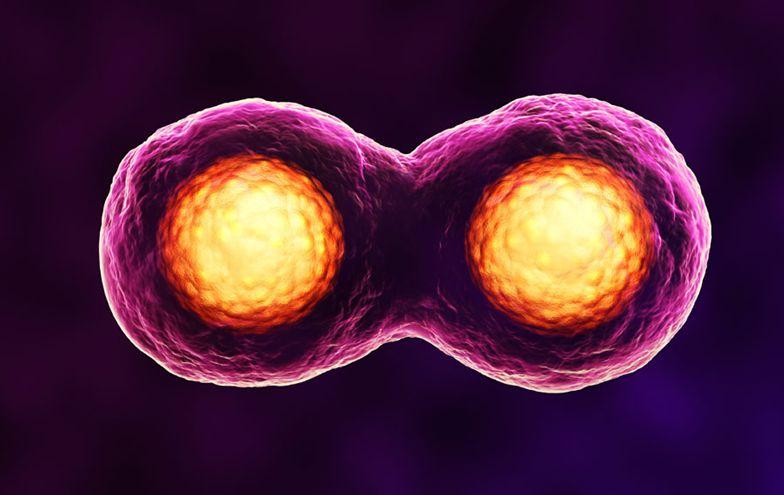 【深圳做试管婴儿的医院】_美国试管婴儿胚胎是如何培养的